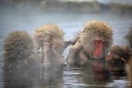 Monkey Park : entraide