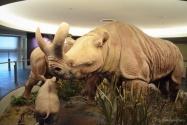 musee de la nature Ottawa : Brontotherium
